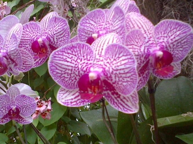 குழந்தைகள் செல்போனில் பேச தடை 8b121-orchid-3