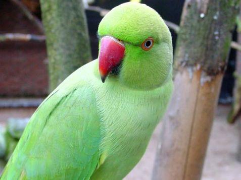 18-1439873796-parrot35-600.jpg